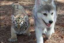 I love animals / by rosemarie gorney