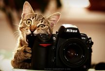 Cats Cats Cats / Meeow - cats seem to love being photographed...funny seeing how they are often mistaken for aloof.            I will not pin anything that looks like cat abuse for entertainment. / by Parker Judie
