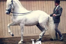 Must see / Watch these great content on HorseLifestyle.TV