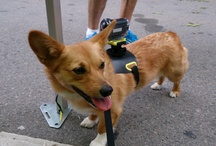 ActionCam at Woofstock / We took to the streets of Toronto to find some Canine models for our new Sony ActionCam mount for dogs
