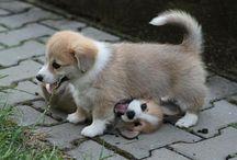 Puppies / by Kimmy Jarasunas