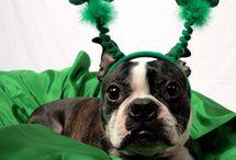 St. Patrick's Day Pets