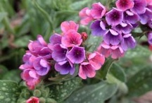 Flower WL Shade Plants / by Sandy Hilliard