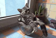 CATS / by Joyce Lim
