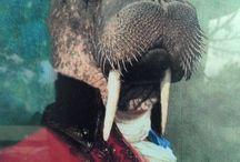 I like animals...and walruses