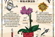 Orchid & Plant Care / Learn about plant care