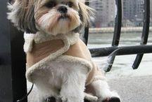 Shitzu y otras razas de perritos