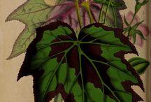 Grafika Botanika