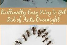 get rid of bugs