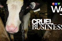 Animal Welfare Issues