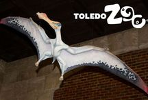 Flying Reptiles exhibit / New in 2014 -- flying reptiles return!  www.toledozoo.org/flyingreptiles
