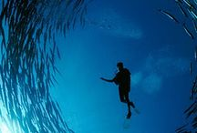 dive deep / I love diving, nothing compares to being under the water
