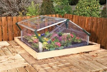 Gardening  / Greenhouse Gardening you will fall in love... / by Saria Newman