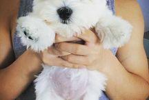 lover dog