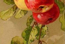 owoce w akwareli