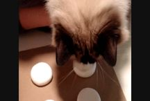 How to Get Your Cat's Paw Prints