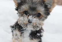 Cute puppy in the snow!!..