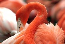 Flamingos / by Meghan Smith