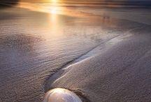Seashells / She sells, seashells, by the seashore.  Except I collect seashells by the seashore that are vacant.