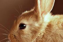 Conejoos