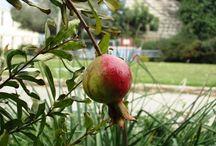 Pomegranates and poppies