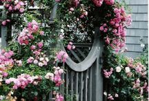 Gates, trellises and arbors / Garden ideas and vignettes for walkways and vines...