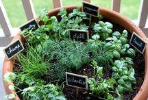 Mini kitchen garden