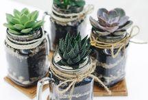 Pozsgás összeültetések / Succulents plant