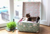 Valise chat / Valise chat
