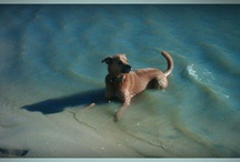 Pet Friendly Vacations / by Rental Places
