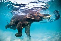 MY HOLY ELEPHANT
