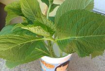 Garden/Plant Guff