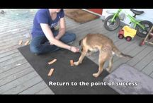 Tips from Wonderpups Training