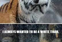 Animals That Make Us Laugh / by Crown Ridge Tiger Sanctuary