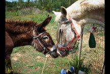 Animal welfare / Animal welfare in Crete