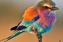 Z Animal colours: Very colourful !