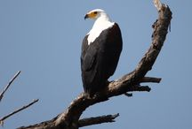 Birds / Birds in Africa