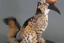 taxidermy metamorfosis