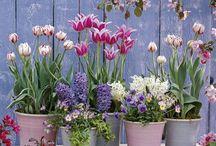 potee jardin printemps