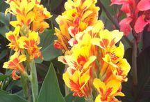 Hampton Court Flower Show Inspiration