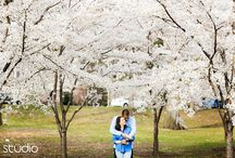 2016 Cherry Blossoms Location Guide in East Coast / Cherry Blossoms location guide in Washington DC, Philadelphia, North Jersey and Central Park NYC. Good engagement photo spots for spring cherry blossoms festivals.