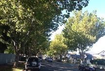 My favourite town, Rangiora! / Rangiora, North Canterbury