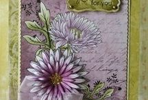 Delicate Asters Card