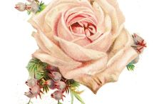 Vintage, rose