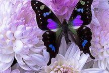 butterflies, beauty