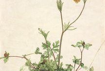 rysunek-rośliny-technika