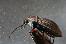 Intresting bugs