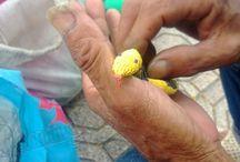 Tái sử dụng túi nilong để sáng tạo đồ chơi thân thiện từ túi ni lông / Câu chuyện về cụ ông với đam mê sáng tạo đồ chơi thân thiện cho từ những túi ni lông đã qua sử dụng