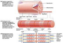 Anatomy & Anatomi
