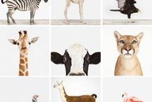 animals & prints